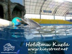 Киевский дельфинарий построен без разрешения