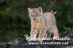 В Киевском зоопарке нарушений не нашли