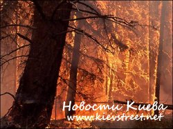 В Киеве запретили гулять в лесу