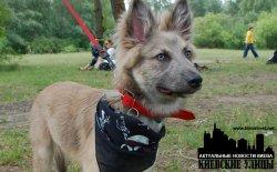 В Парке Дружбы Народов пройдёт выставка беспородных собак Кубок Барбоса 2011