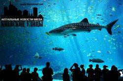 В киевском зоопарке может появиться океанариум