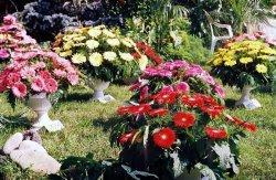 В Киеве пройдёт ежегодная выставка цветов