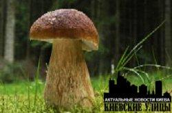Двадцать дней в Киевской области запрещено собирать грибы
