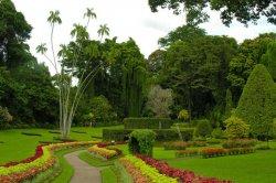 В ботаническом саду пройдет выставка цветов