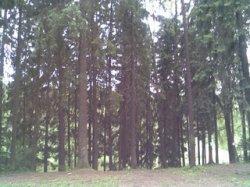 Киевсовет признал памятниками природы 25 деревьев