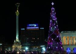 На Майдане установят елку