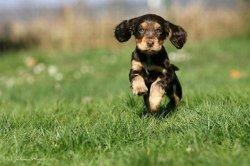 Ветеринары призывают сделать прививки от бешенства собакам и котам