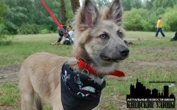 16 июня в Киеве пройдёт ежегоднаявыставка беспородных собак
