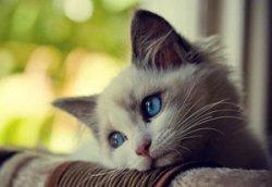 Как выбрать котенка, как ухаживать за ним