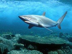 В столице будут жить акулы