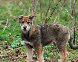 Под Киевом собака напала на детей и беременную женщину