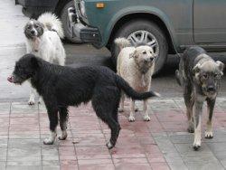 Под Деснянским судом протестуют защитники животных