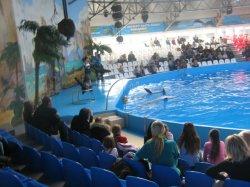 Активисты требуют закрыть дельфинарий