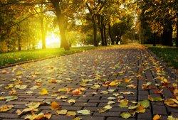 Осень в Киеве – сезон аренды квартир в Киеве посуточно