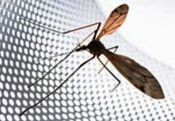 Москитные сетки – самое эффективное средство от насекомых