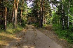 В лесу Святошинского района снесли МАФы