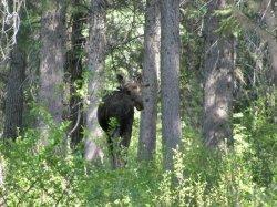 В столичных лесах продолжают подкармливать животных
