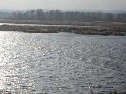 Бориспольский суд вернул 8 гектаров земли