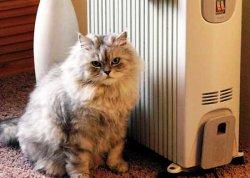 Виды современных электрических обогревателей