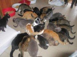 Приюту для животных выделили большую сумму