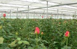 В Киеве будут применять новые методы выращивания цветов