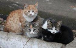 В Киеве построят центр защиты животных европейского образца