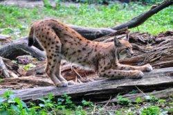 Киевский зоопарк будут реконструировать