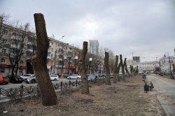 В Киеве могут запретить обрезать деревья