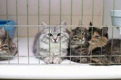 В Дарницком районе появится Центр защиты животных