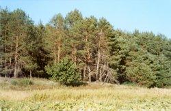 На Дарнице открыли еще одну зону отдыха на природе
