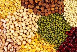 Советы в посевах бобов и огурцов