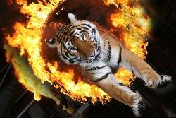 Передвижные цирки с животными в Киеве отныне запрещены