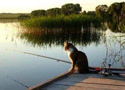 Киевским рыбакам напомнили о том, что начинается нерест