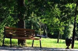 На реконструкцию киевских парков выделили более 200 миллионов