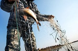 Рыбинспекция Киева в августе зафиксировала нарушений на миллион гривен