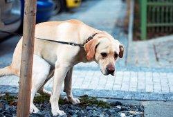 Владельцев собак заставят за ними убирать