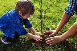 В Киеве раздадут бесплатные саженцы для озеленения