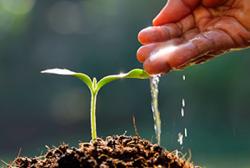 Чому так важливо обробляти насіння, використовуючи добрива ДоброДІЙ?
